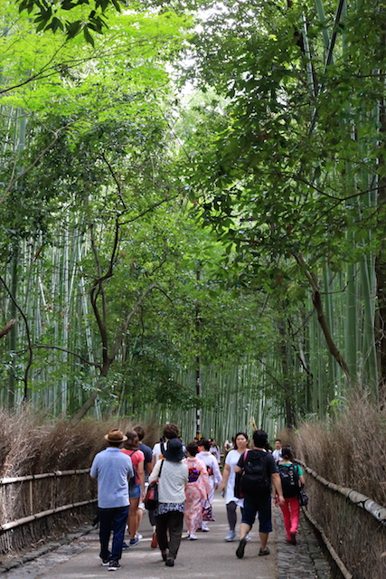 京都嵐山竹林