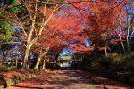 晩秋の京都山科毘沙門堂