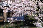 2016年京都の桜(鴨川・高瀬川・祇園白川)