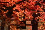 京都嵯峨野・嵐山の秋(2016)