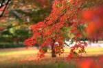 京都御苑の紅葉 2017