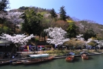 京都 嵐山の桜 2018