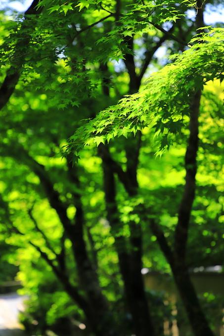 京都 光悦寺