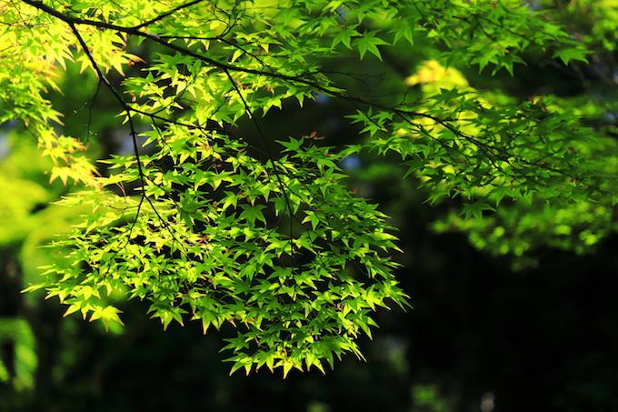 京都 常照寺