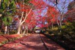 京都山科毘沙門堂の紅葉 2018