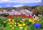 京都府立植物園 2019 春