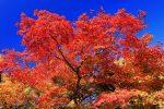 京都府立植物園の紅葉 2019