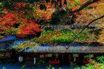 京都奥嵯峨の秋