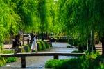 新緑の京都白川