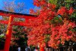 京都 下鴨神社の紅葉 2020